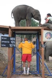 Sri Chinmoy hebt Babyelefant